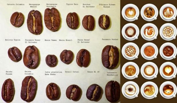 coffee-variety