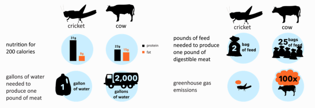 crickets-vs-cows-resources-infographic