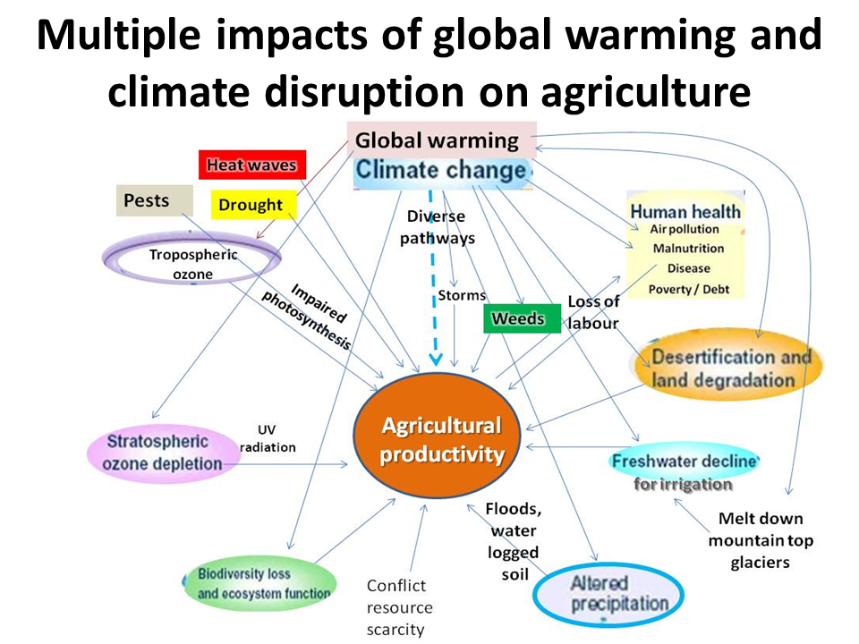 global food security under climate change essay Ii) scenario 2: climate change and food security  under the current climate,  the coefficient of variation (cv) of the global total cereal production for the trend  in.