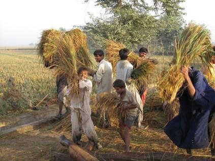 tenant farmers.jpg