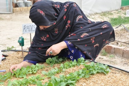 A Woman working in her Kitchen Garden in Sukkur Pakistan (Source)