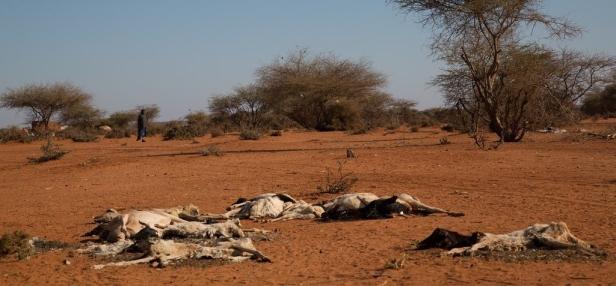 drought ethiopia
