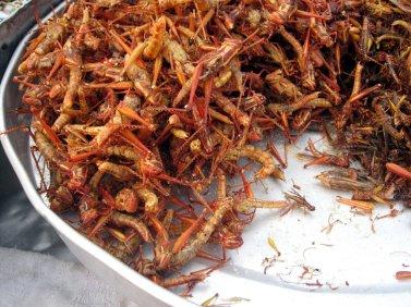 Fried_grasshoppers_in_Bangkok
