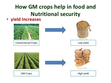 gm-crops-for-long-term-food-security-14-638