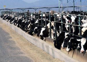 https://pixabay.com/en/cattle-feedlot-agriculture-livestock-868032/