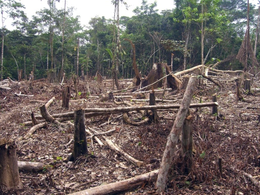Slash and Burn Agriculture - Amazon